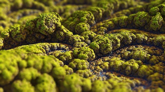 zelená plíseň