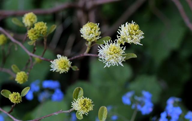 kulaté květy