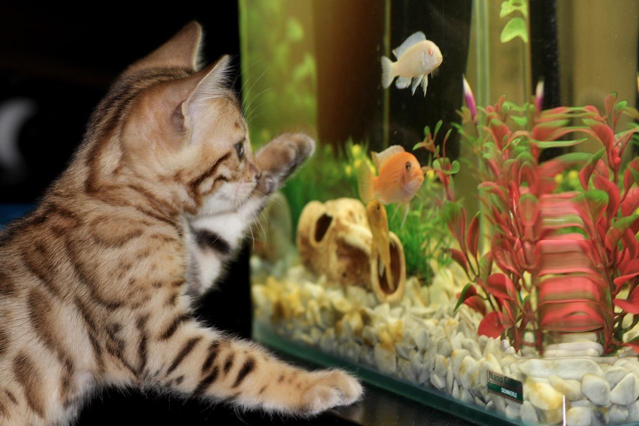 kočka u akvária